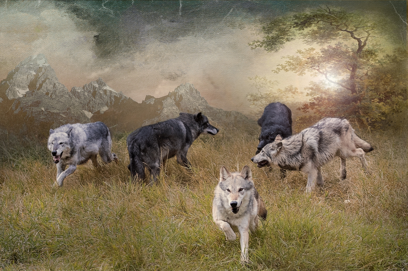 Gathering of the Pack