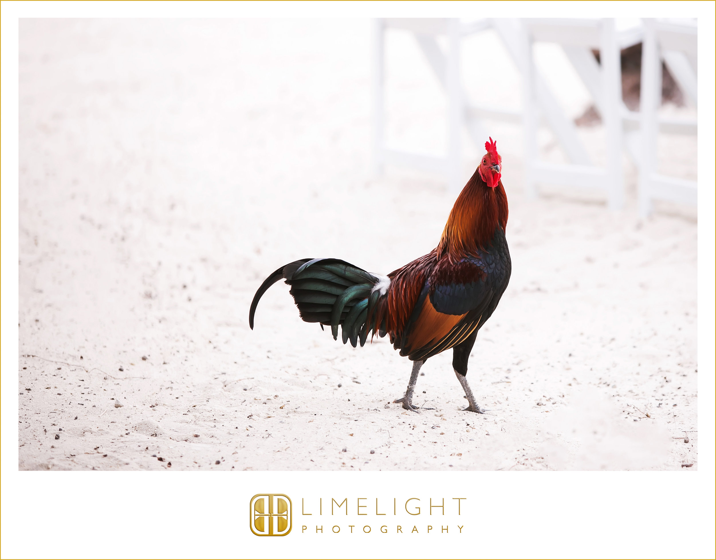 Beach | Chicken | Wedding