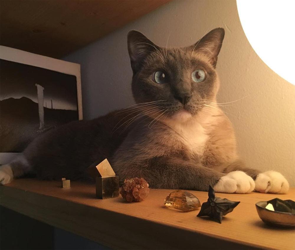 Kevin's cat, Napoleon