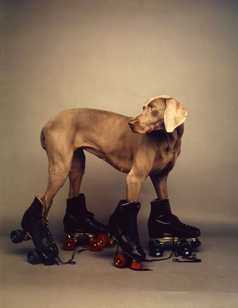 Roller Rover by William Wegman