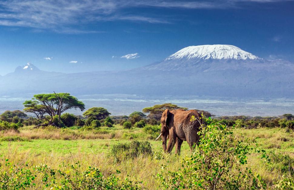 safari2.jpg
