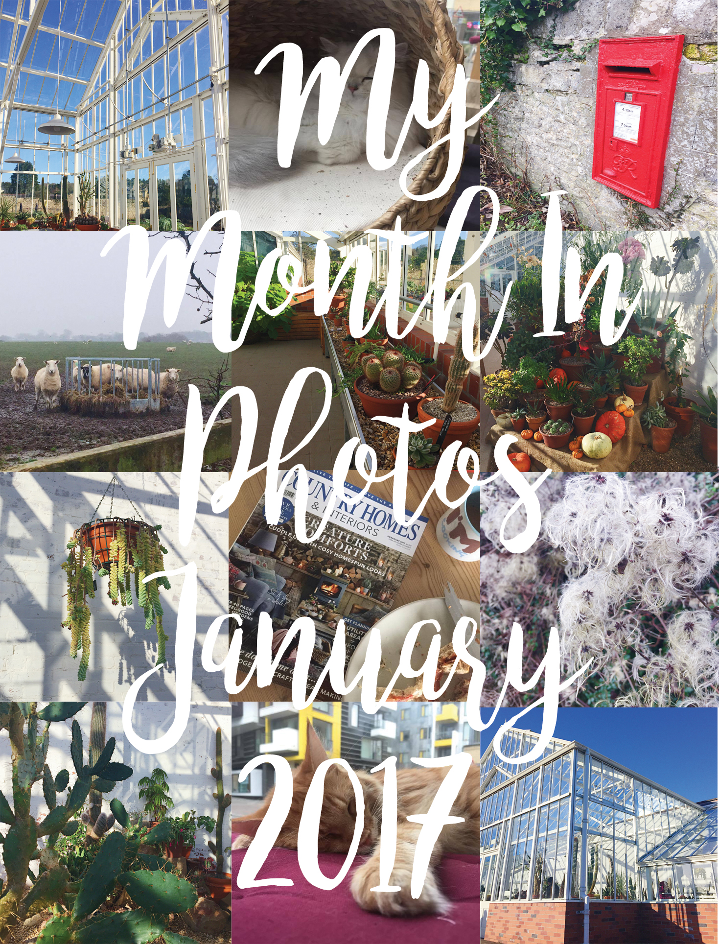 My Month In Photos - January 2017