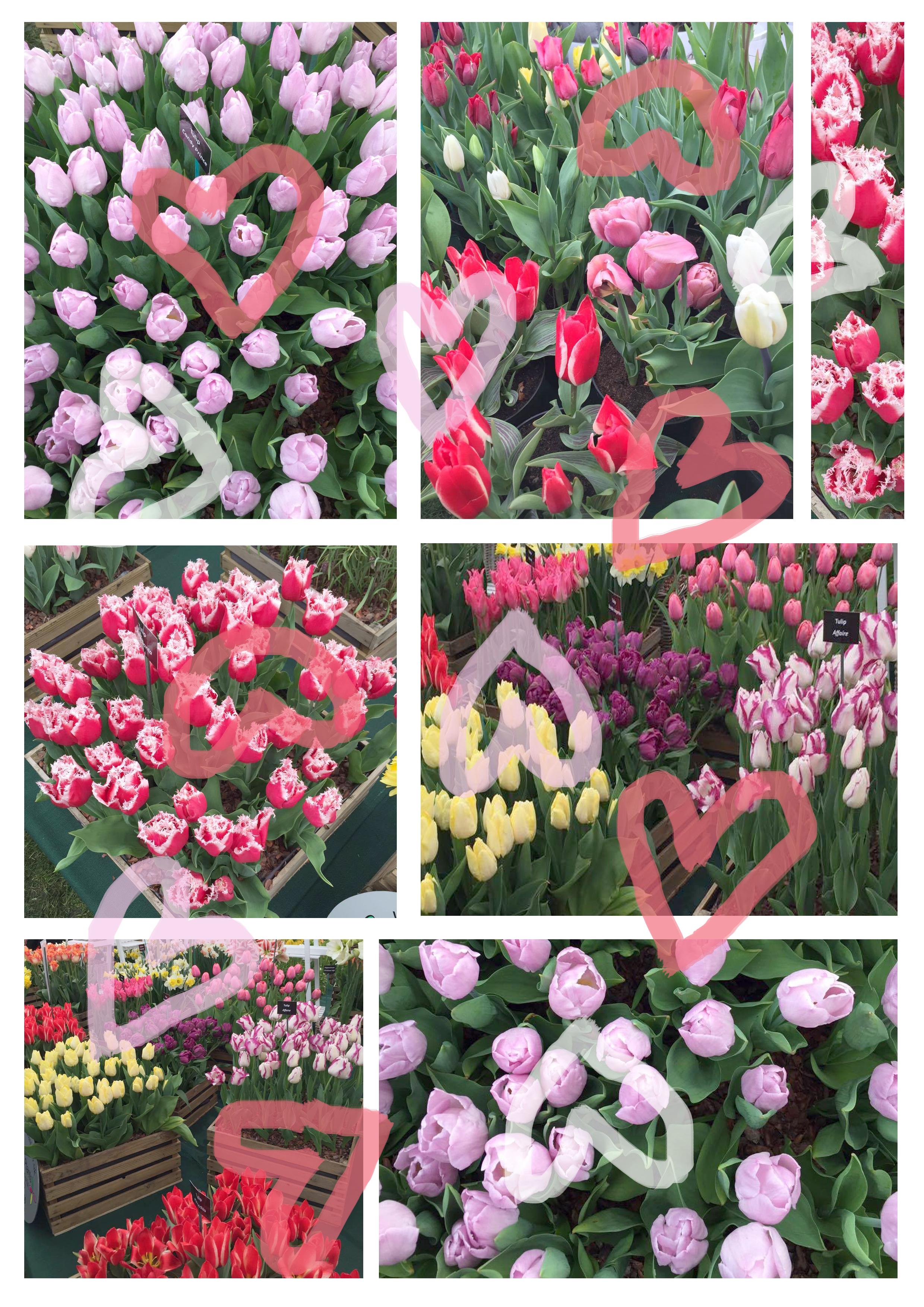 valentinesflowers.jpg