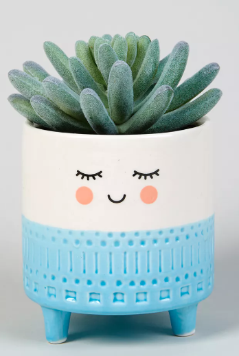 Smiling potted plant - £8 Matalan