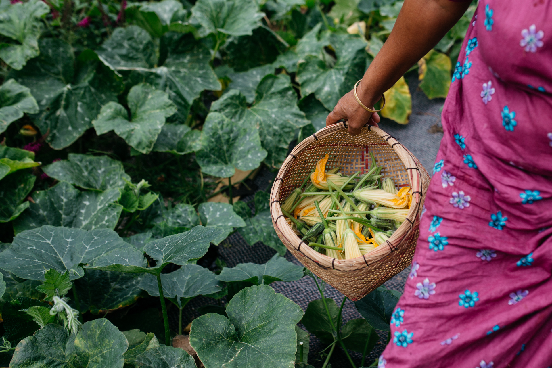 Rajna collects squash blossoms in a beautiful handwoven basket. She learned to weave as a young girl in Bangladesh from her grandmother.