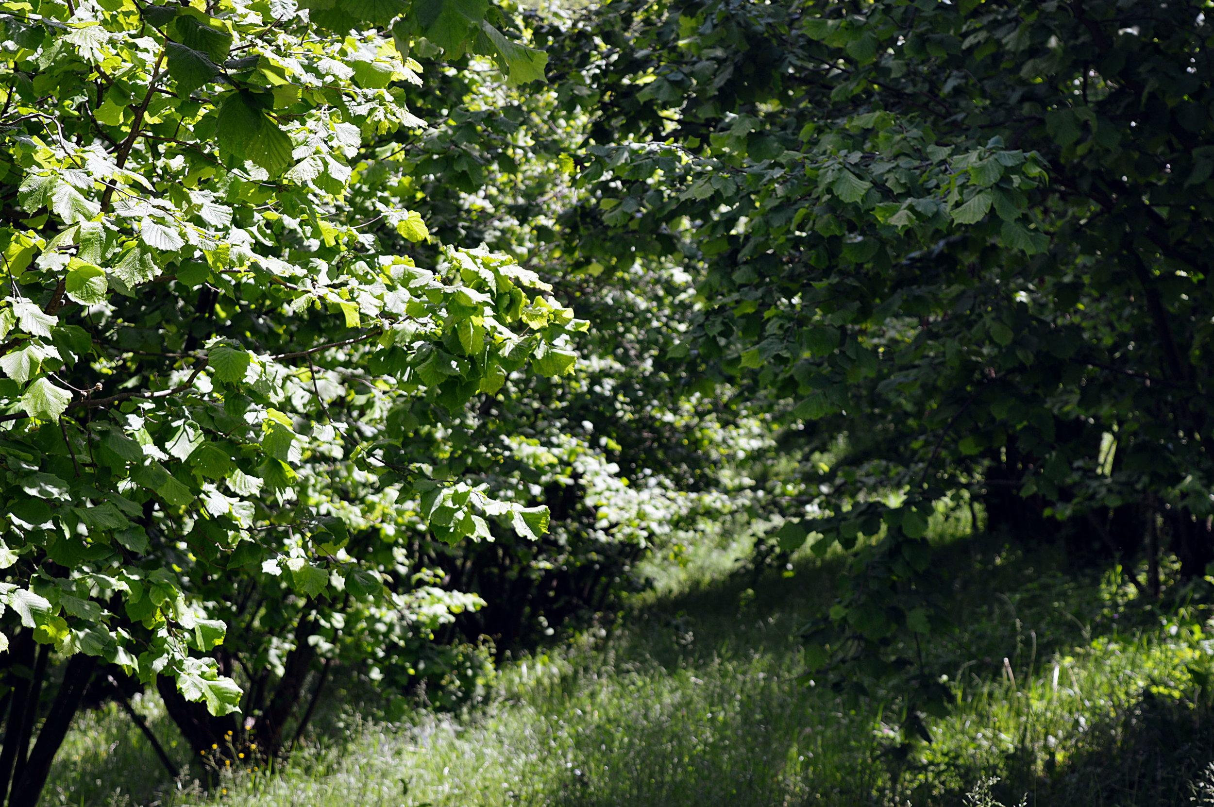 nutrire il paesaggio - UN METODO EFFICACE E NATURALE PER FERTILIZZARE IL TERRENO