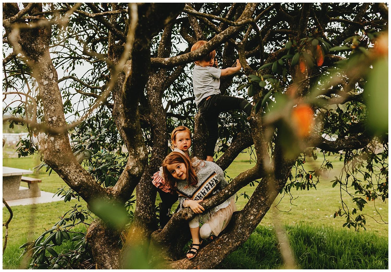 Tree climging kids.jpg
