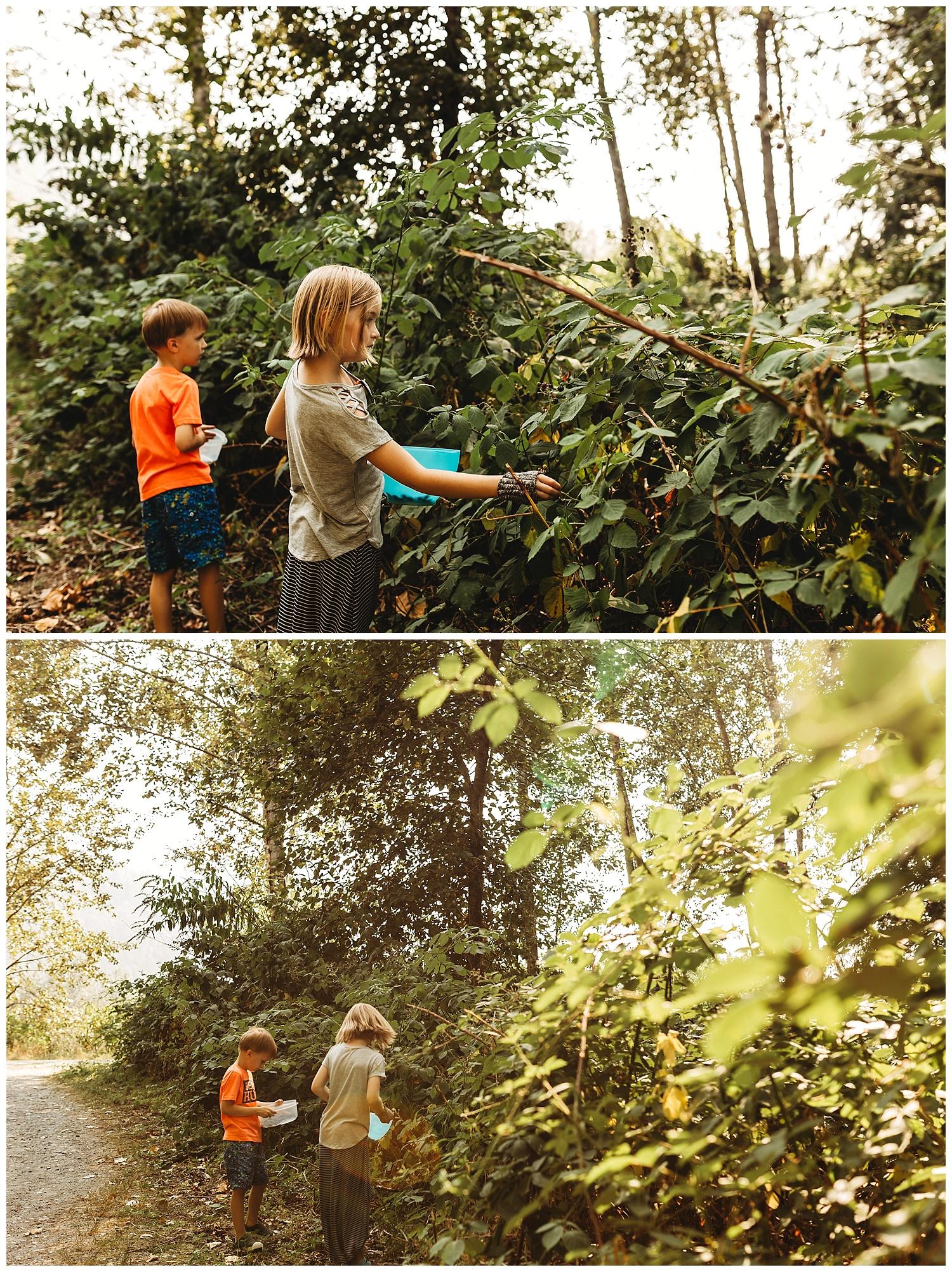 Blackberries Vedder River.jpg