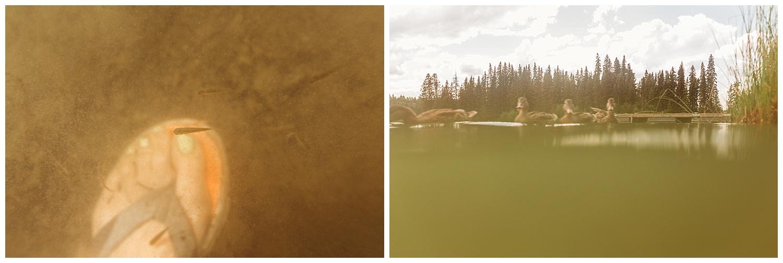 Fawn Lake_24.jpg