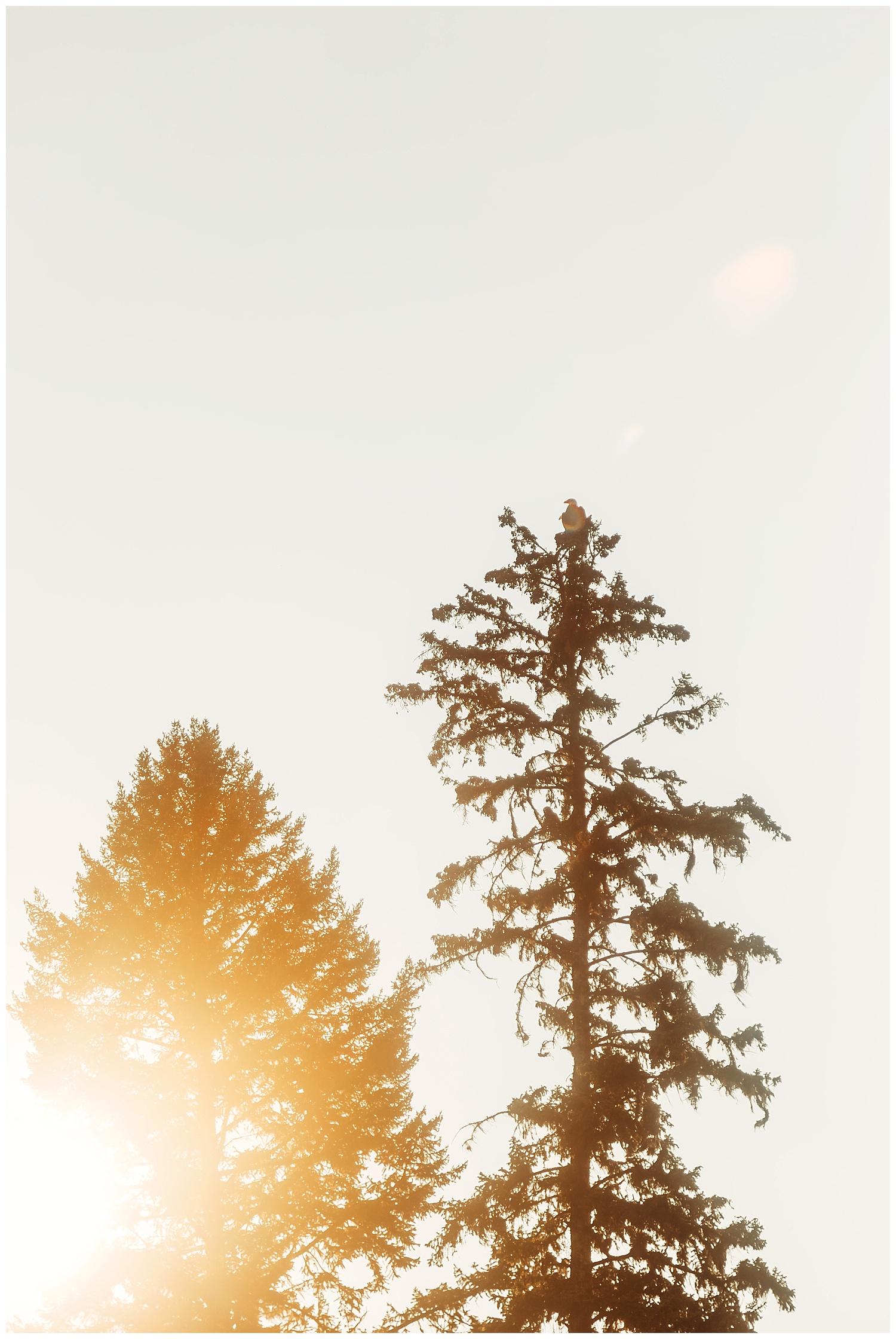 Fawn Lake_157.jpg