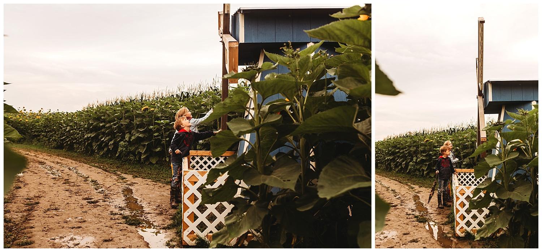Chilliwack Sunflower_3.jpg