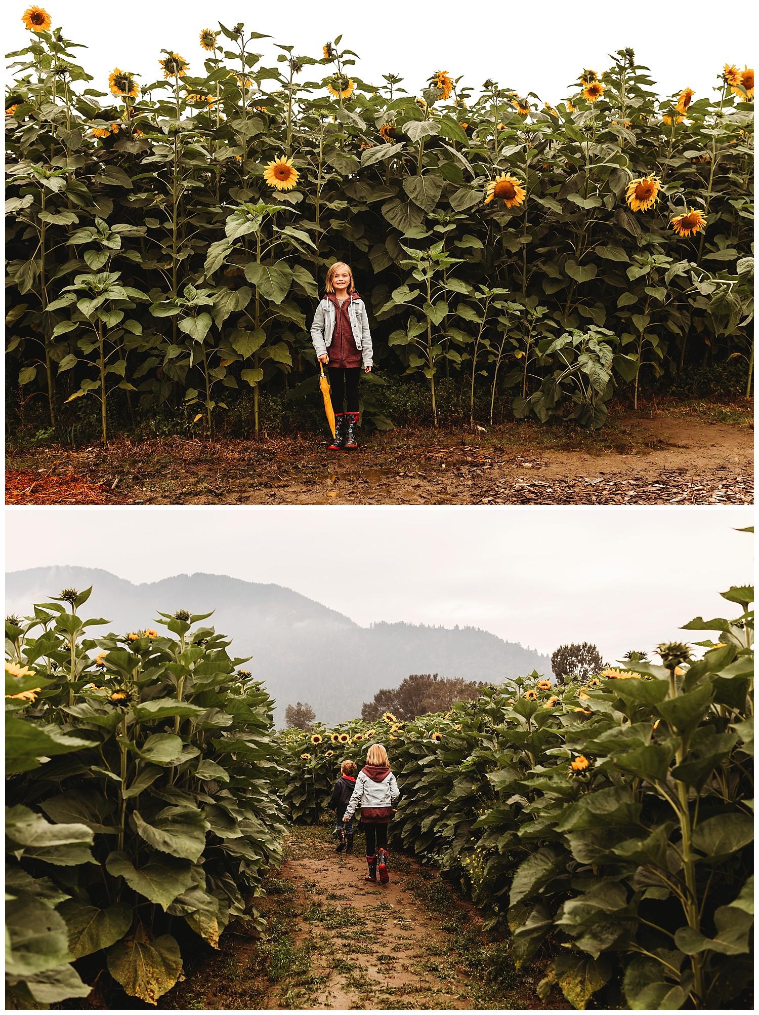 Chilliwack Sunflower_1.jpg