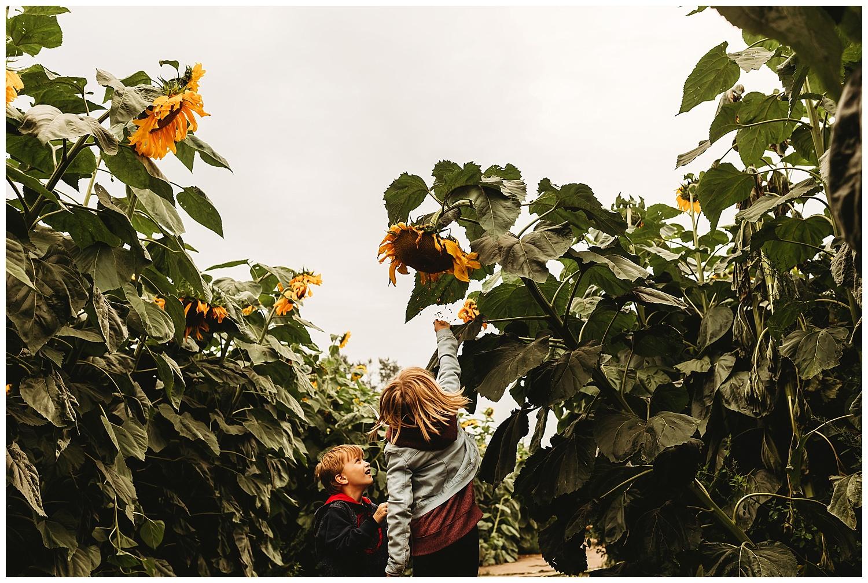 Chilliwack Sunflower_8.jpg