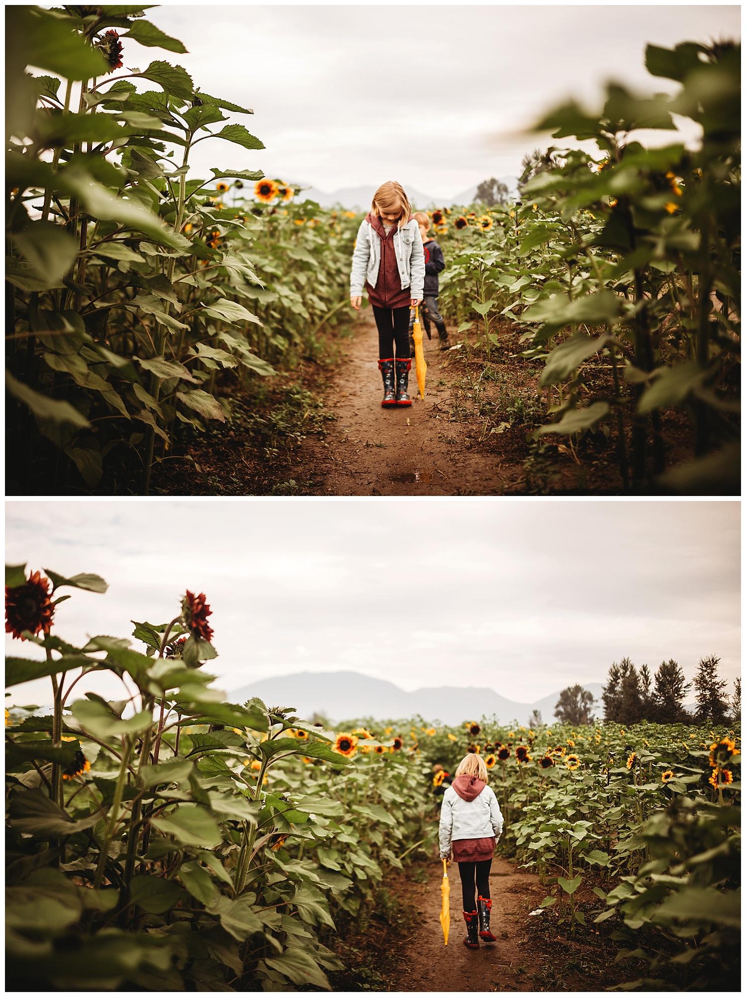 Chilliwack Sunflower_13.jpg