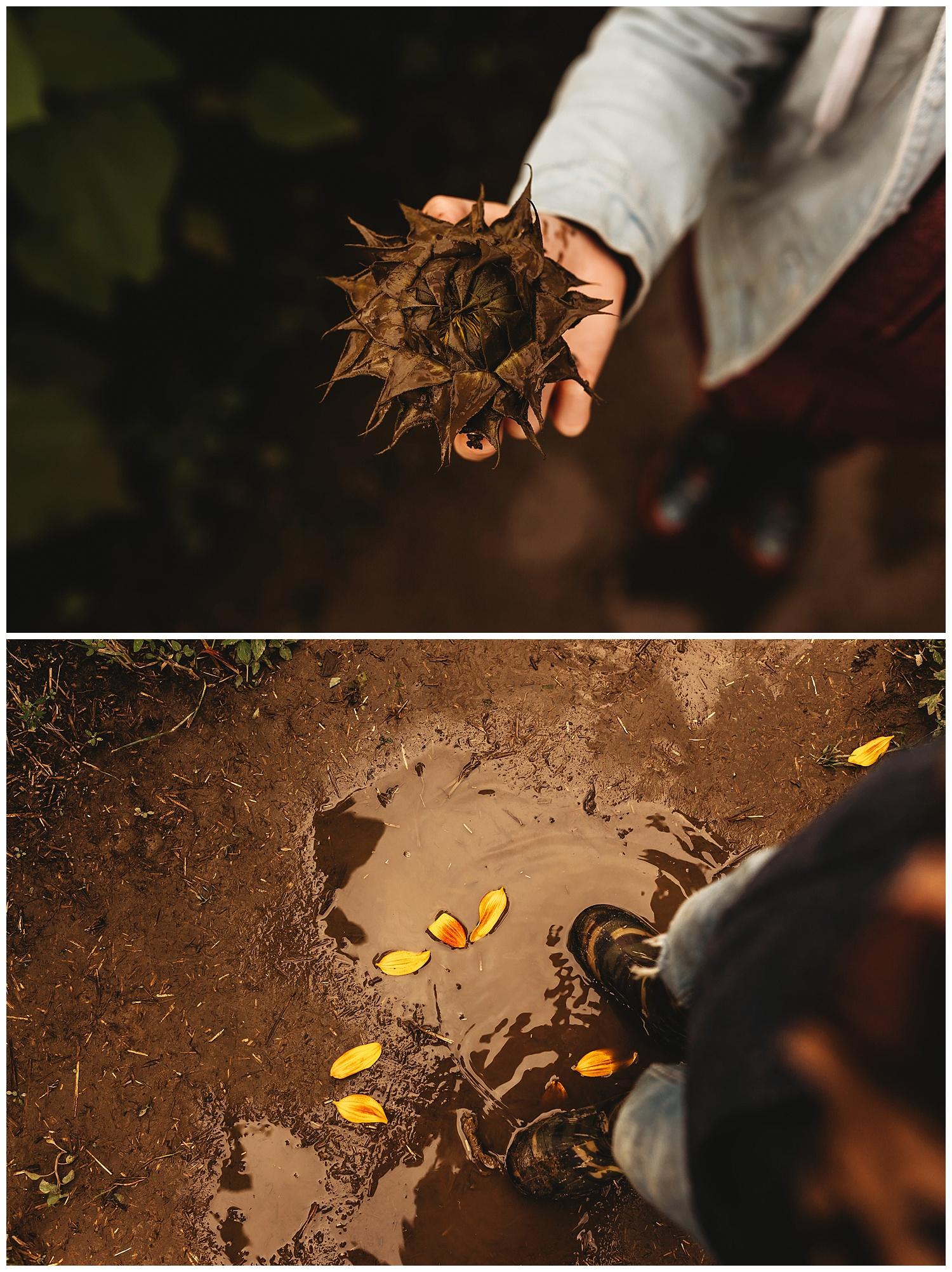Chilliwack Sunflower_15.jpg