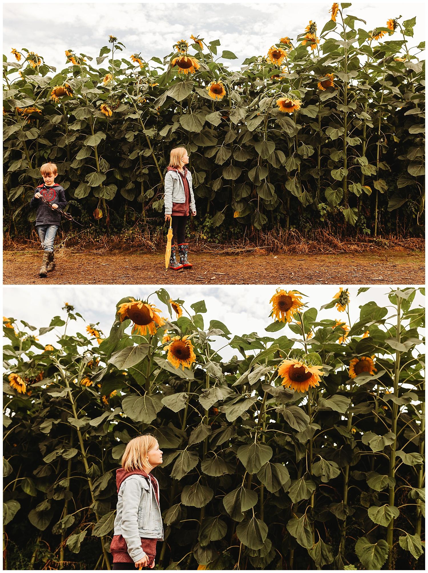 Chilliwack Sunflower_17.jpg