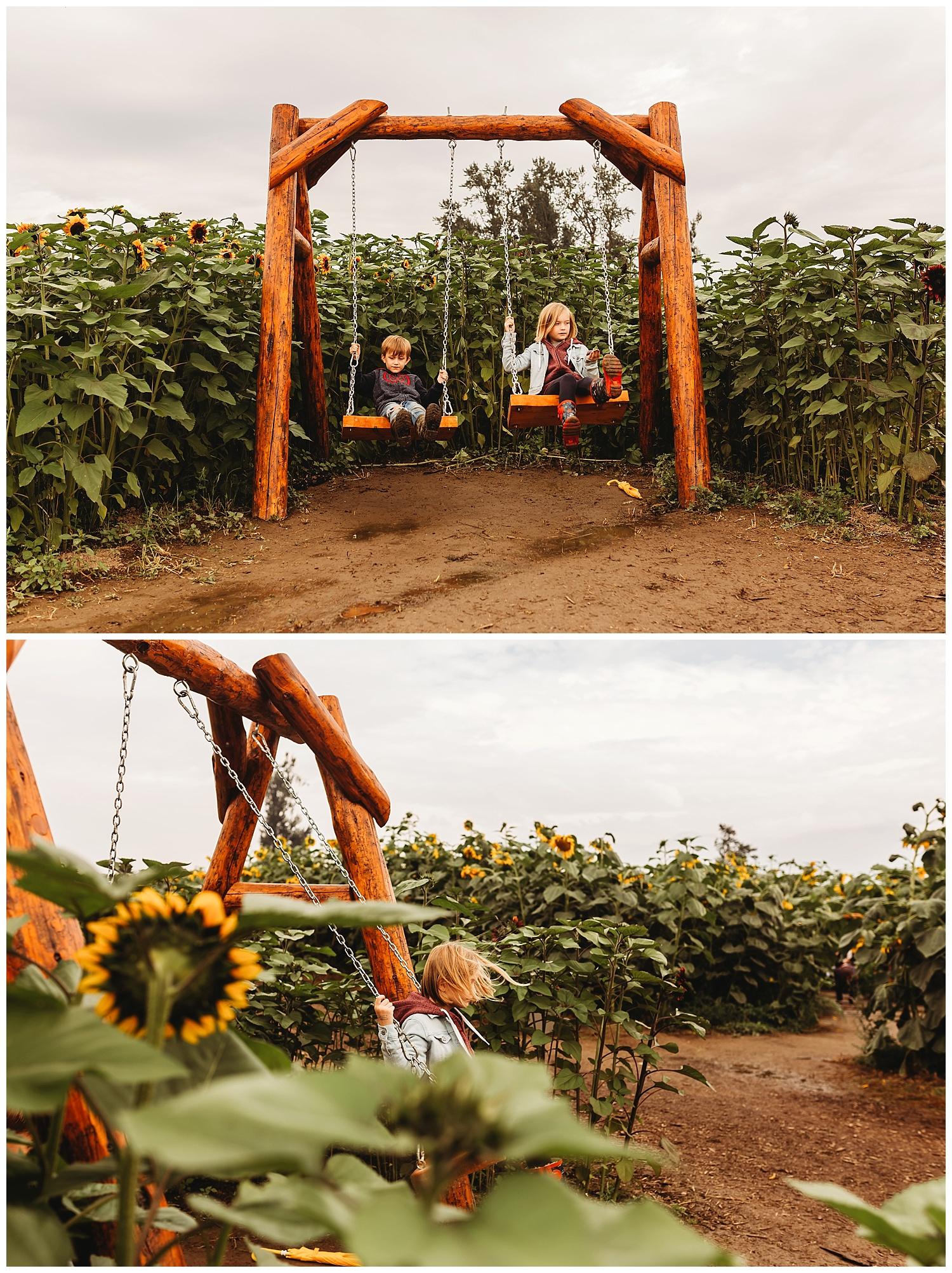 Chilliwack Sunflower_20.jpg