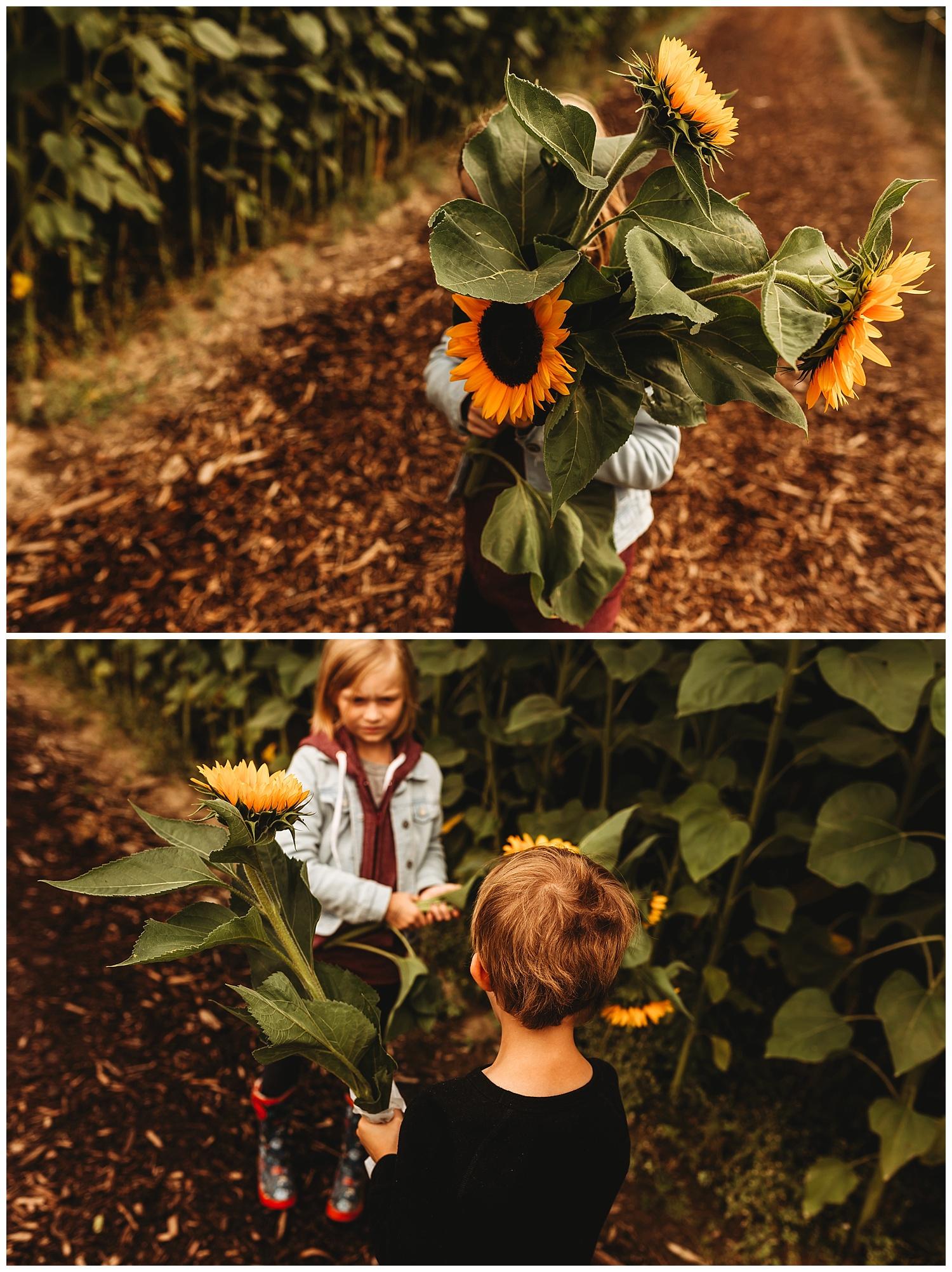 Chilliwack Sunflower_26.jpg