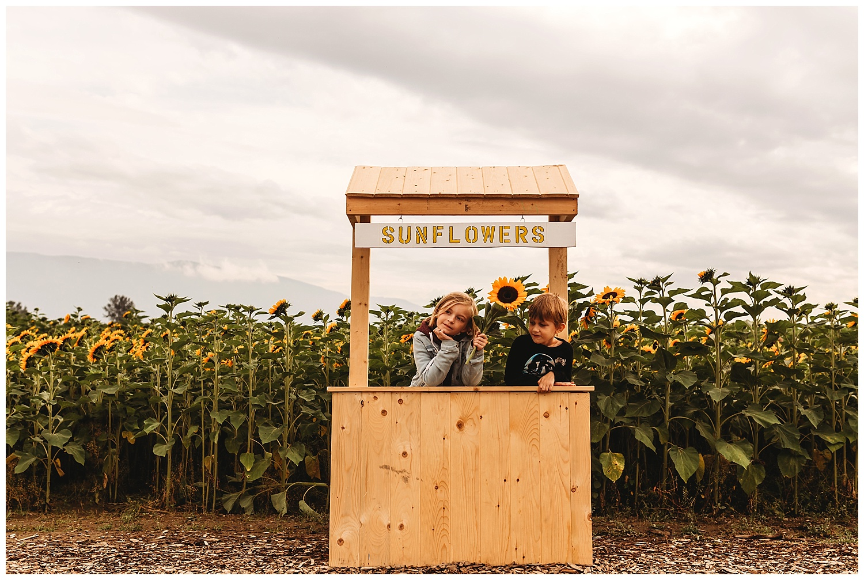 Chilliwack Sunflower_29.jpg