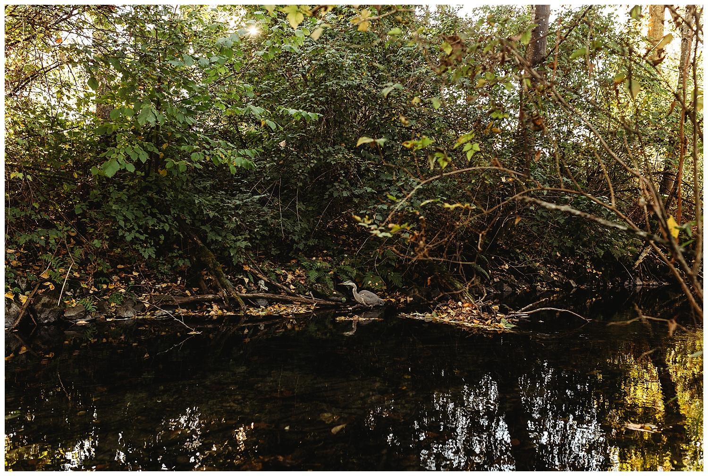 Blue Heron Chilliwack.jpg