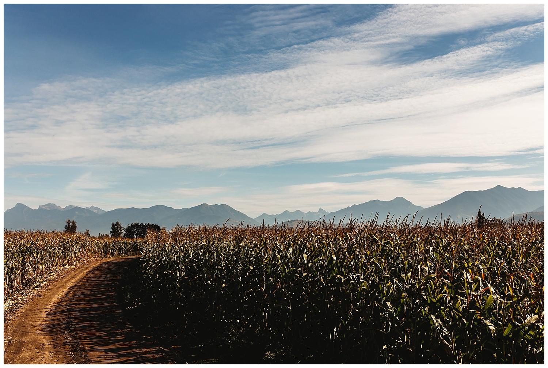 Chilliwack Corn Maze_2.jpg