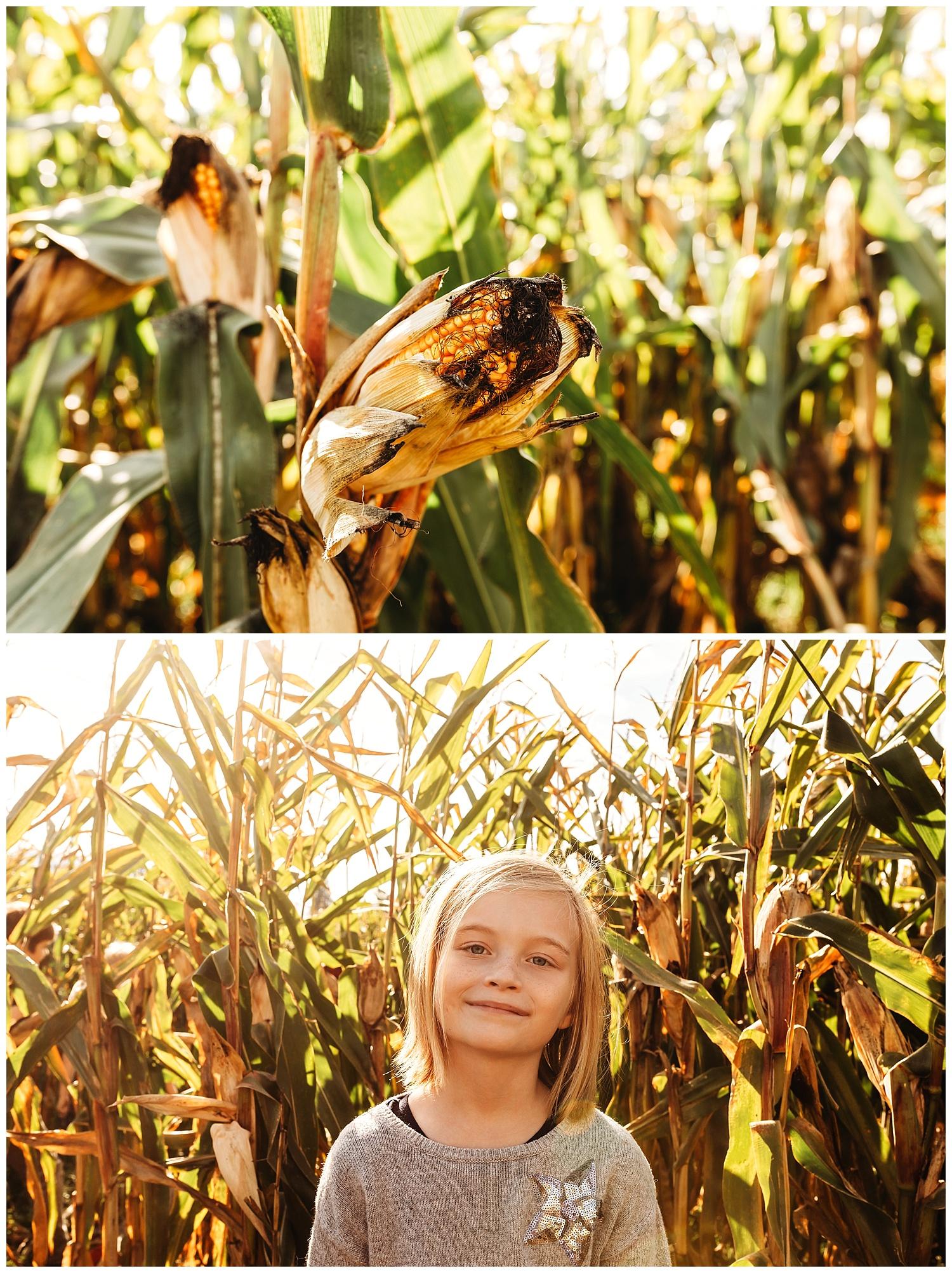 Chilliwack Corn Maze.jpg