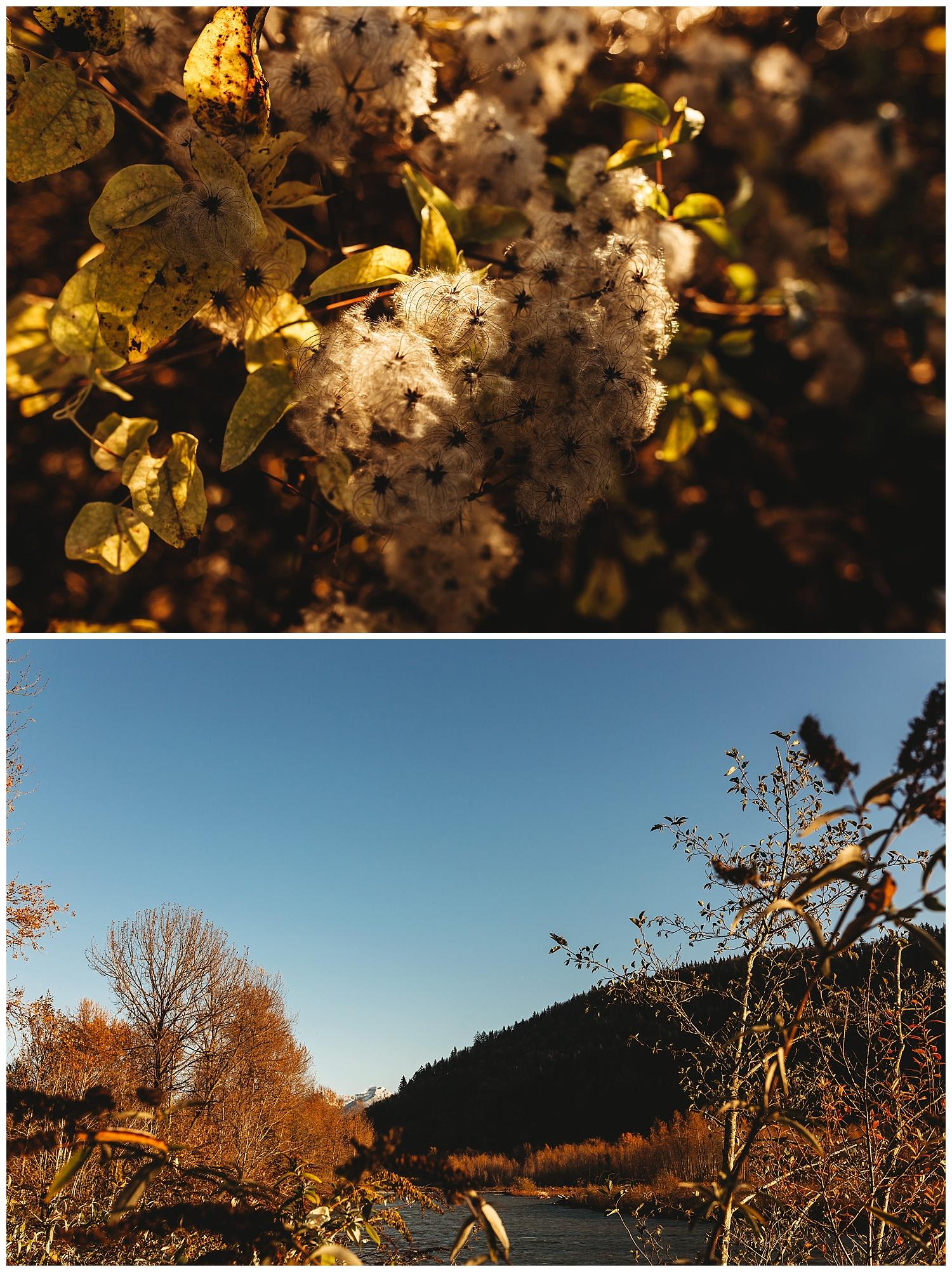 November Chilliwack_2.jpg
