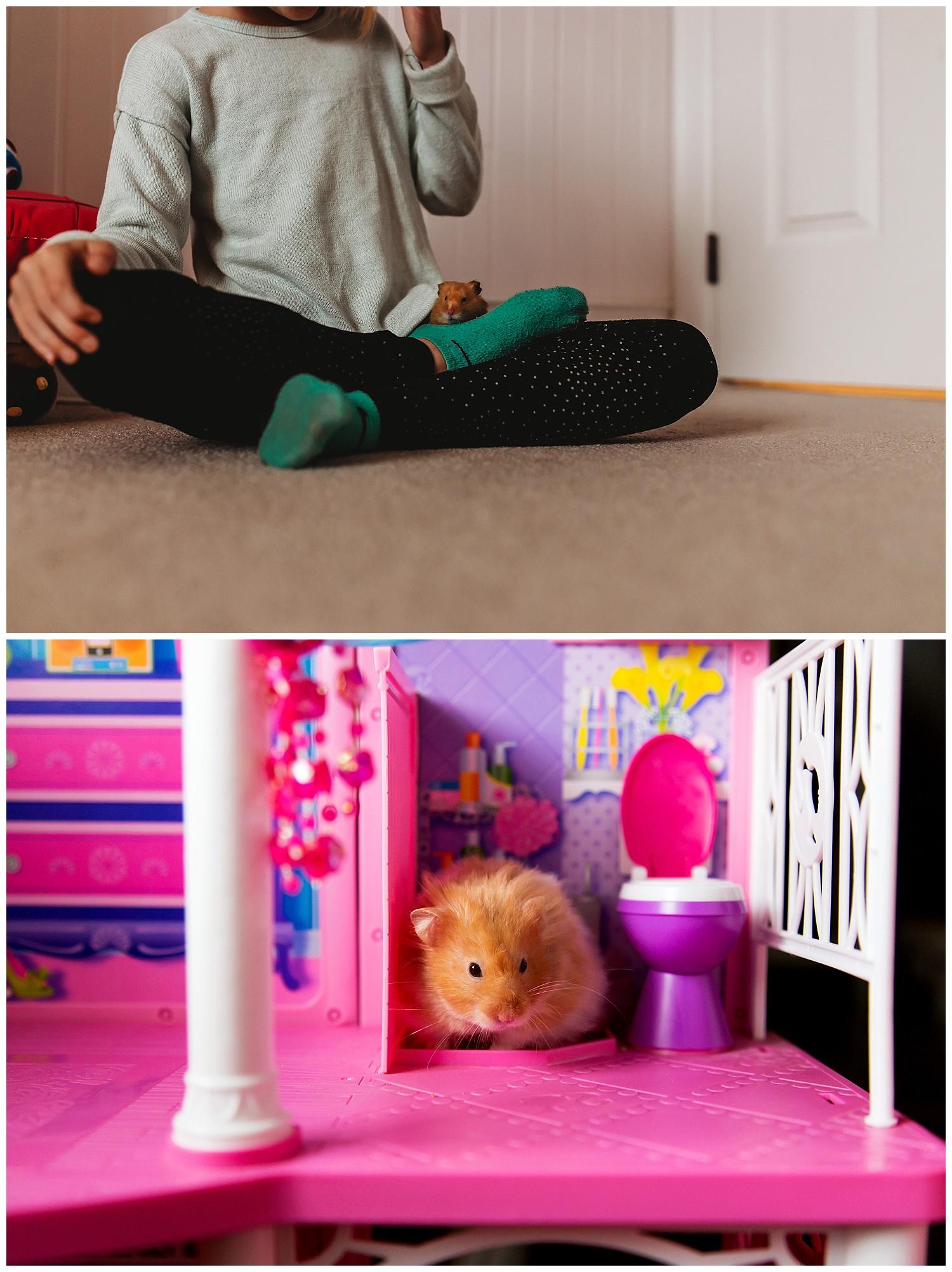 Hamster Chilliwack BC Anna Hurley Photography 5.jpg