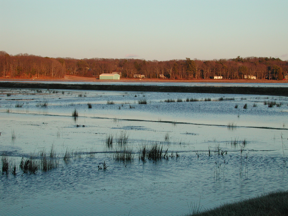 April 1, 2001 | Winter Flood on 35 acre | Late afternoon light