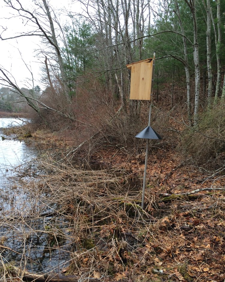 April 20, 2015 | Wood duck house donated by Lee Paulis