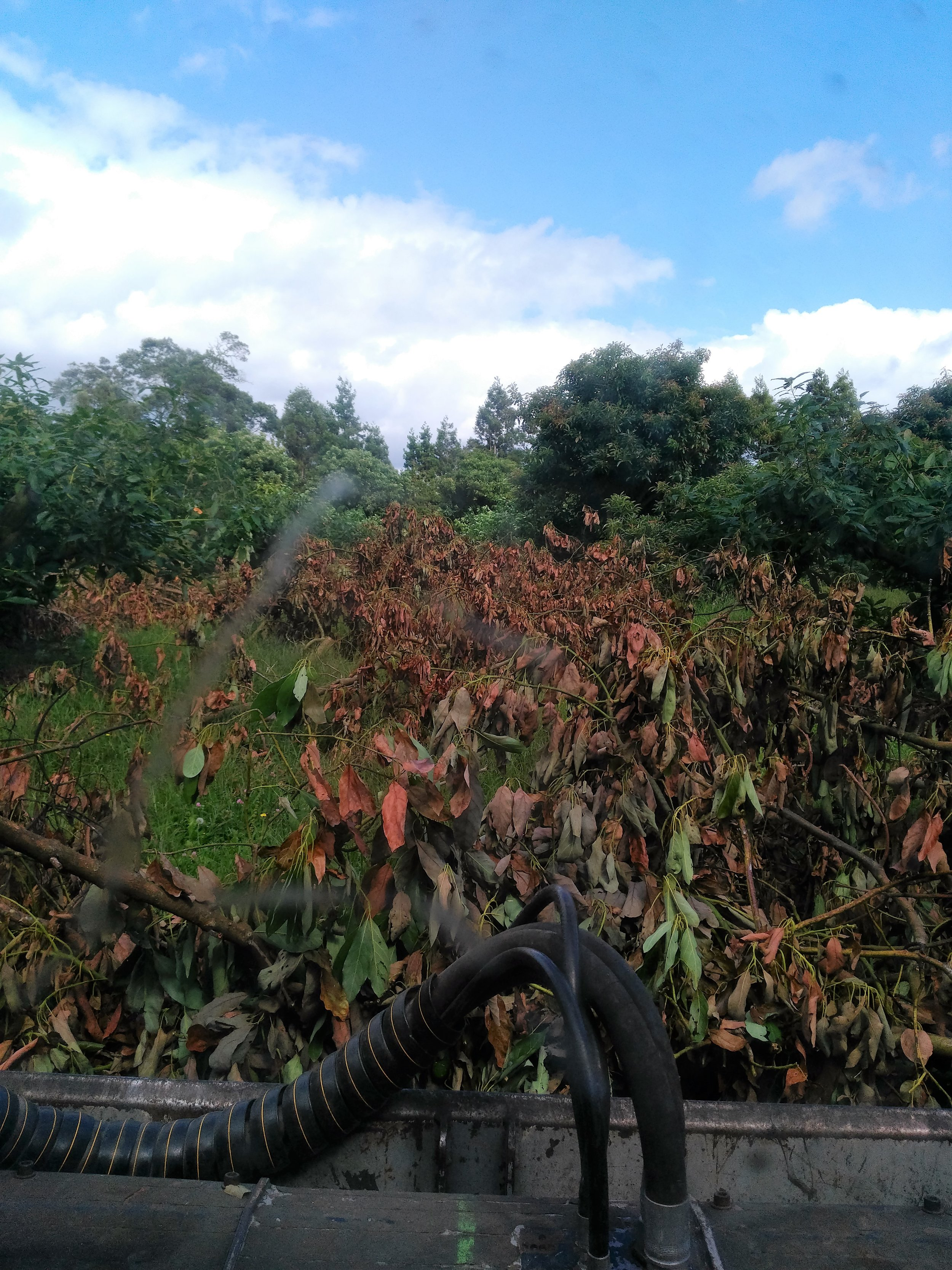 1.  Less work - our machine can get to the branches where they lie, so you don't have to do a thing after the pruners have been through