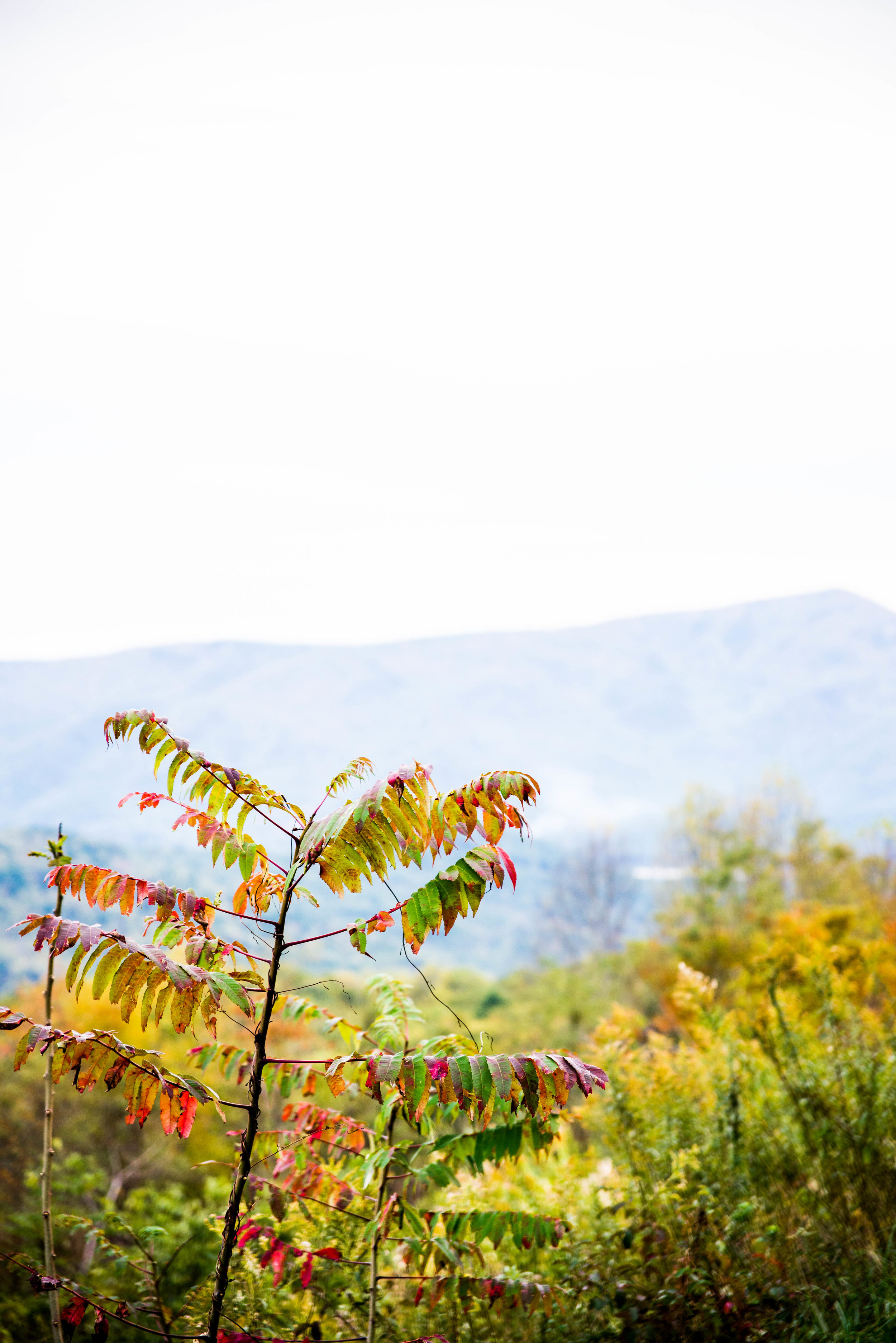 Fall is finally showing it's face in parts of the Blue Ridge Mountains with hints of red, yellow and orange sprinkled throughout.