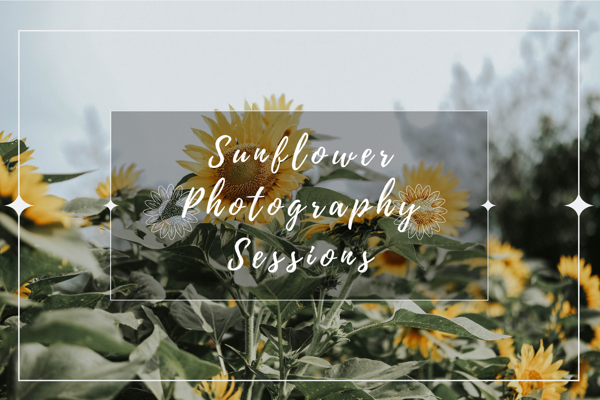 DRP Sunflower Photography Session Promo 3.0.png
