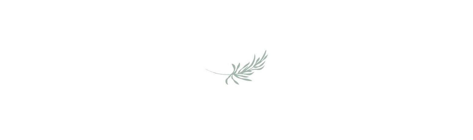Palm Leaf..jpg