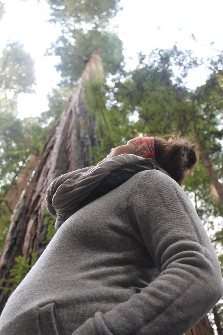 Standing In the Avenue of Giants at 28 Weeks pregnant.