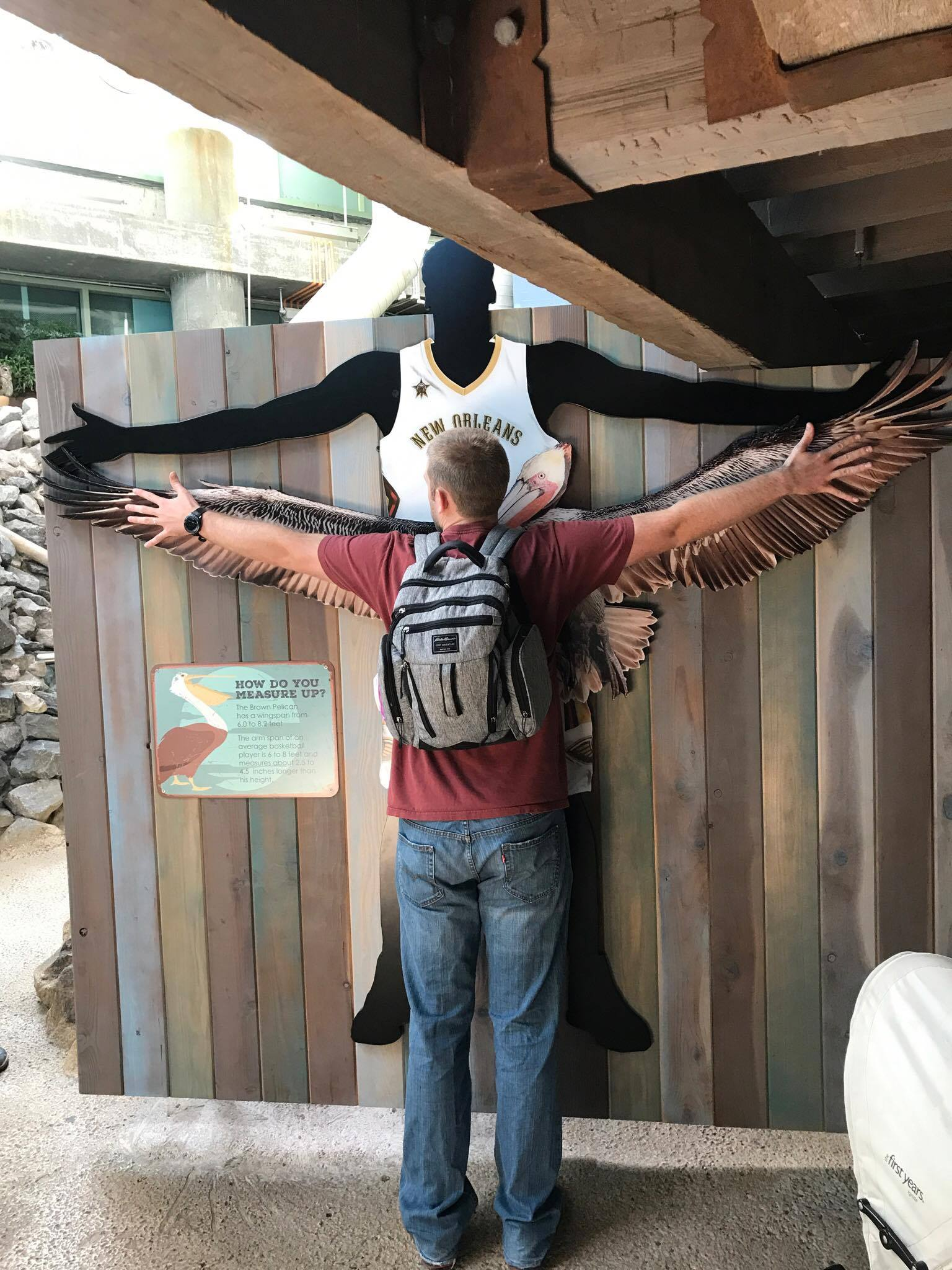 Jimmy comparing his wingspan to a Brown Pelican's wingspan!