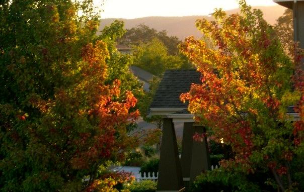 Falling For Change; Pure Simple Change; Simplicity Life Coaching; Sarah Creek
