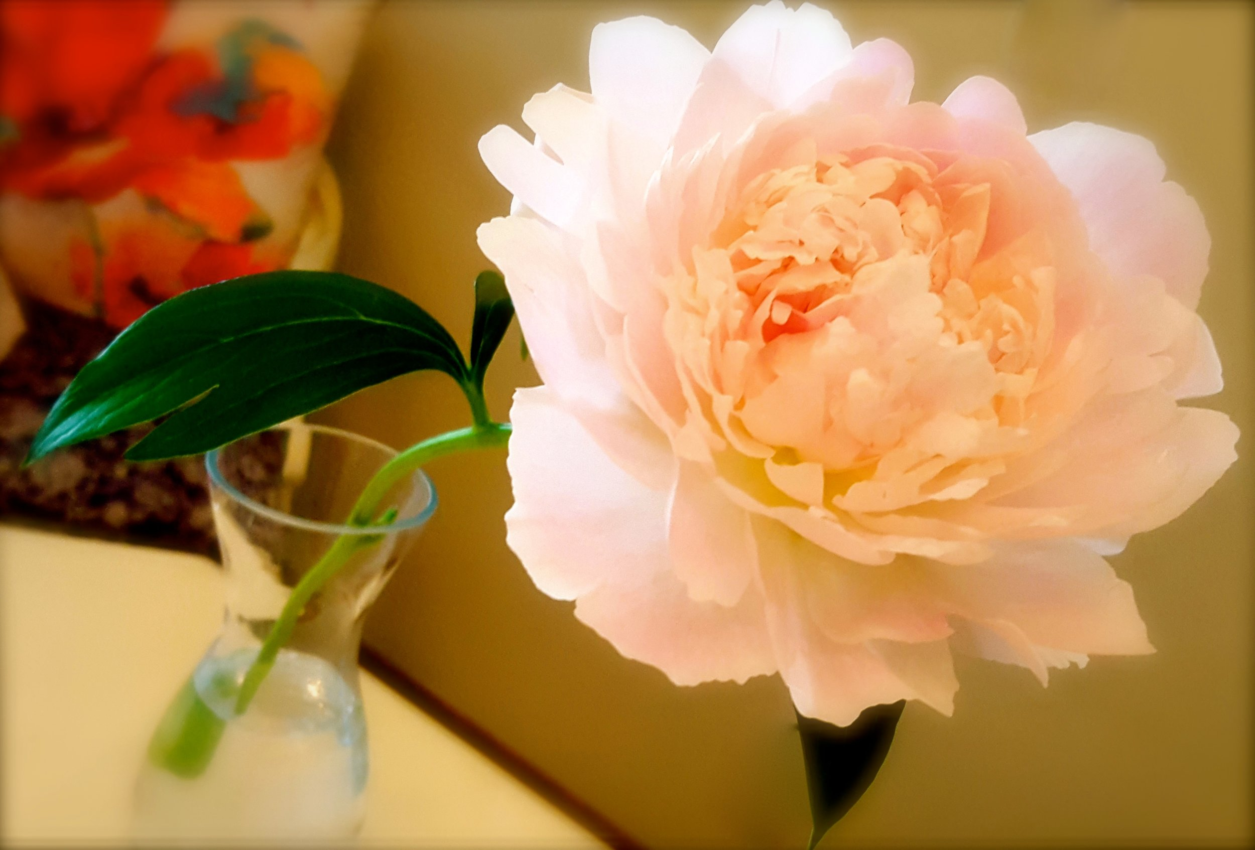 Time To Blossom!; Pure Simple Change; Simplicity Life Coaching; Sarah Creek