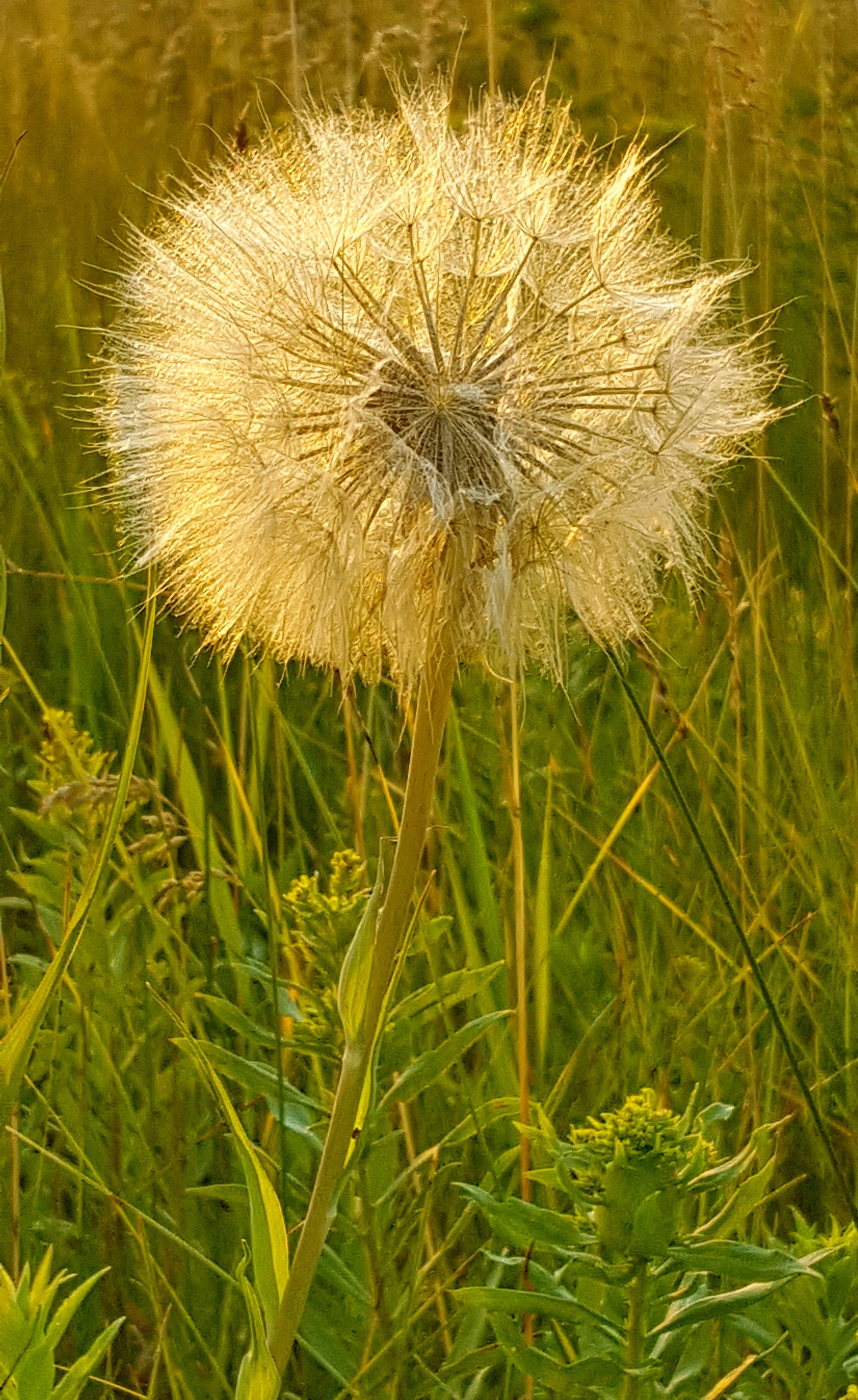 Garden Weeds; Pure Simple Change; Simplicity Life Coaching; Sarah Creek
