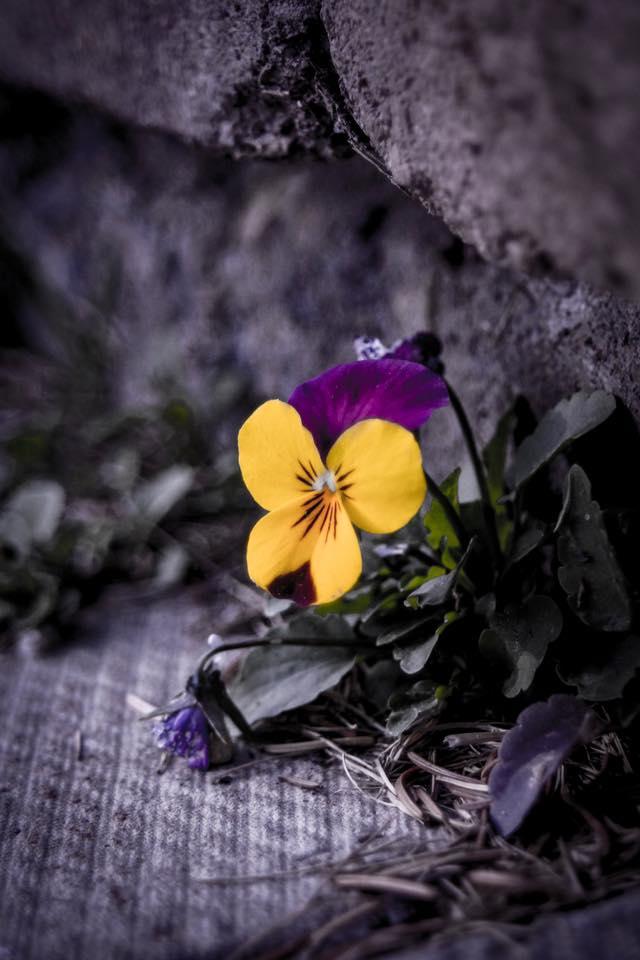 Spontaneity: my new friend; Louis Vaccaro Photography.jpg; Pure Simple Change