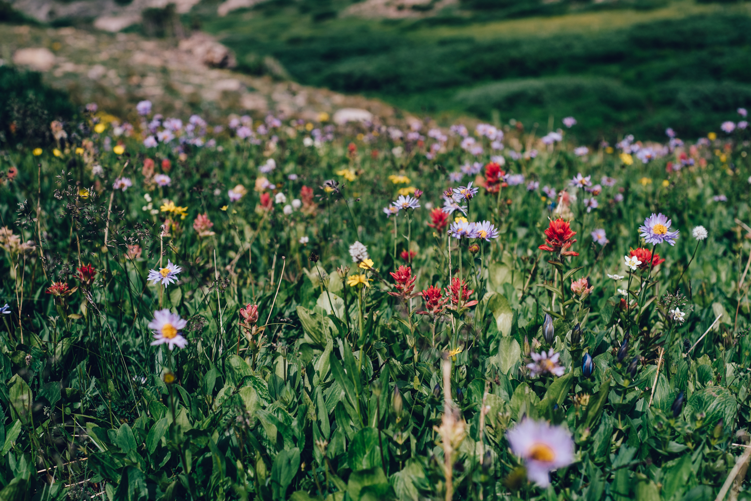 SOO MANY WILDFLOWERS!!