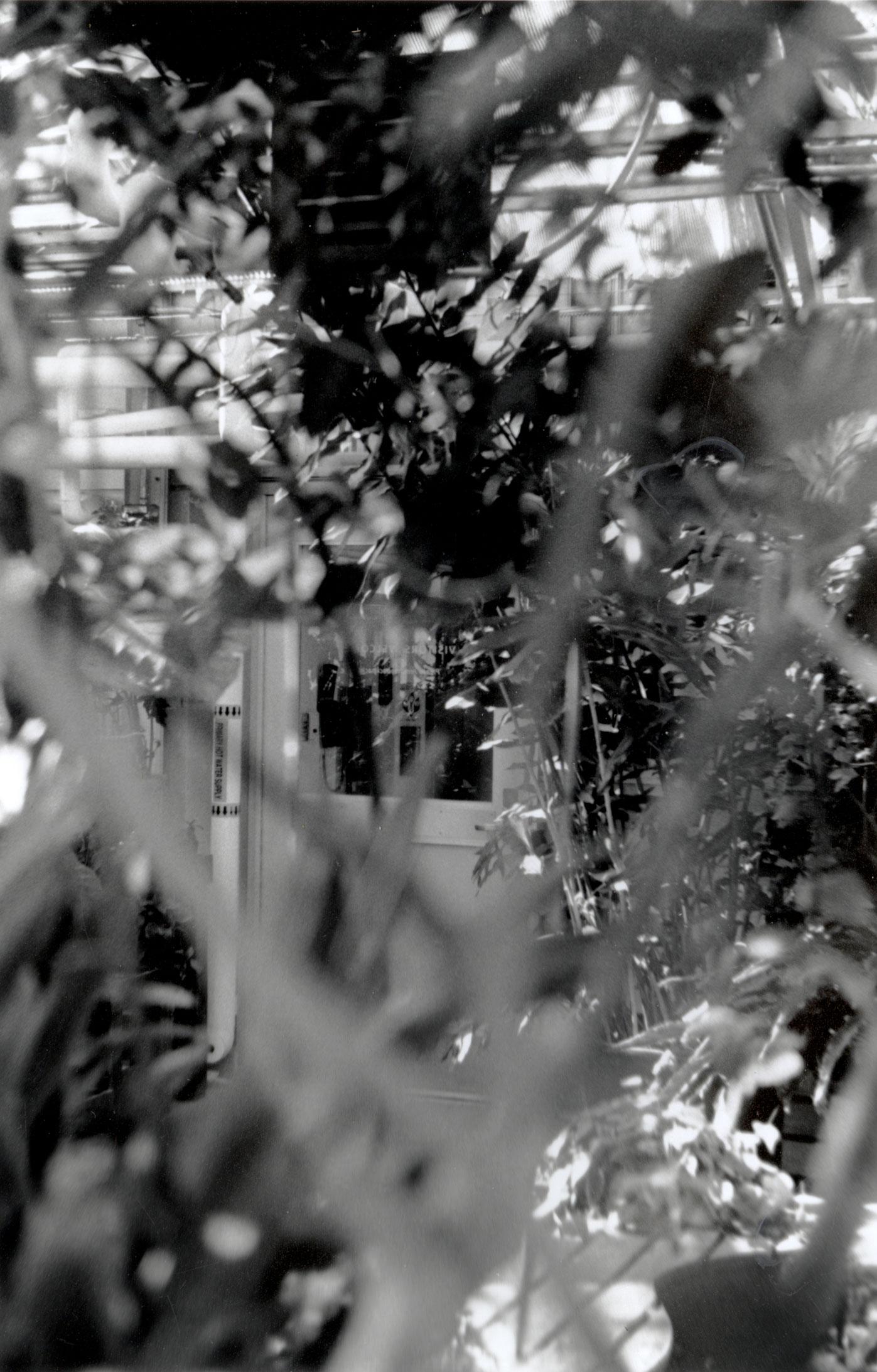 film-selfportrait2-web.jpg