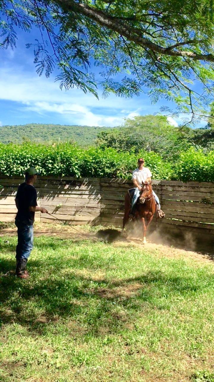 quarter horse training round pen