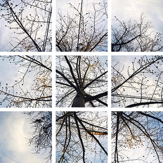 Sycamore Series