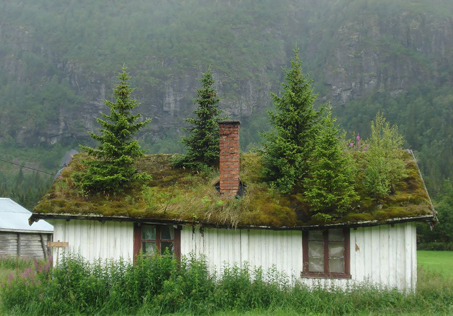 I want to live where it's perfectly acceptable to have trees on the roof.