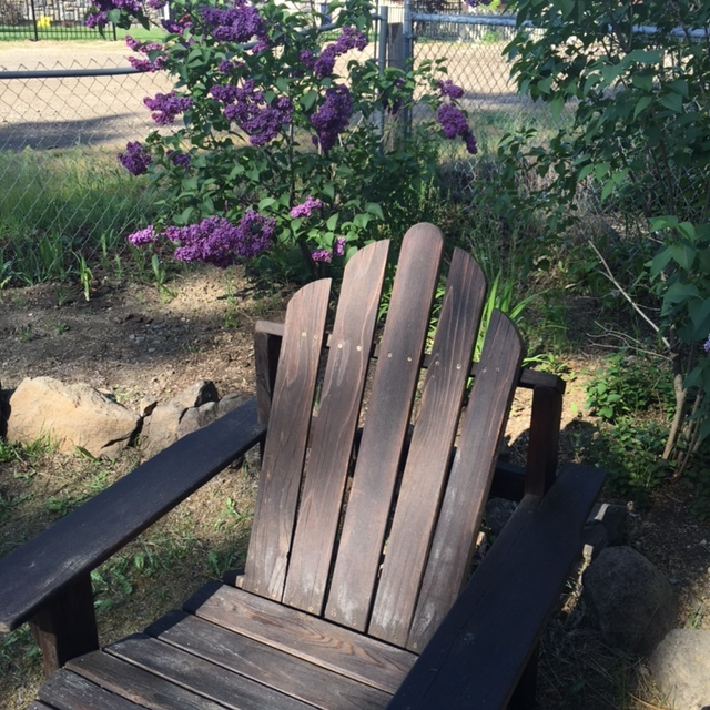 Freshly stained and waxed adirondack chairs for the front yard.