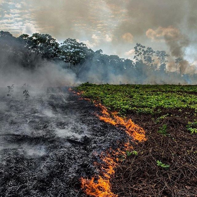 When I see this and allow myself to really feel it, something intense brews within me. Who else is in pain about this? I am gathering allies and making a plan of action to offer support.  @rainforestalliance @leonardodicaprio  @greenpeace  #amazonia