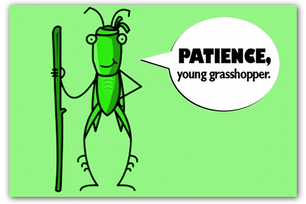patience-young-grasshopper.jpg