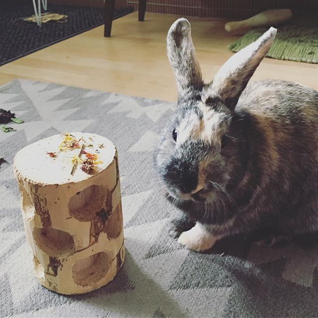 My bunny love ❤️