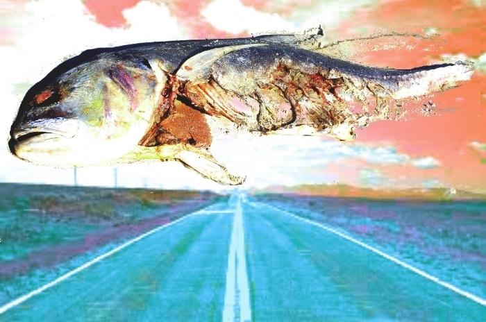 dead fish poem.jpg